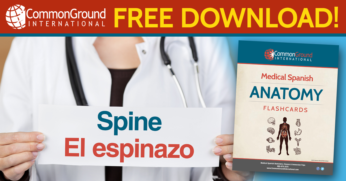 Free medical Spanish anatomy flashcards