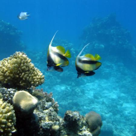 snorkel-adventure-tour
